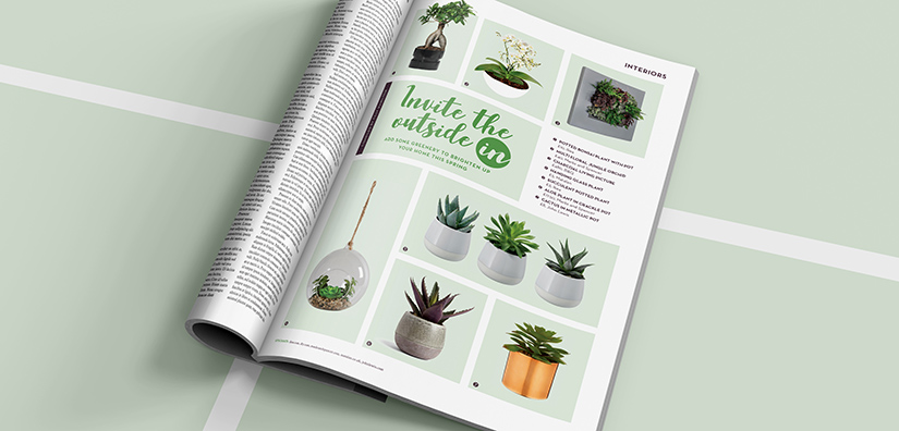Home interiors: Potted plants